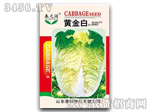 大白菜种子-黄金白F1