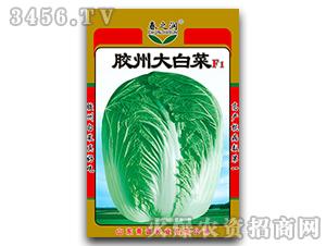大白菜种子-胶州大白菜