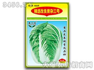大白菜种子-精选改良青杂三号-春之润