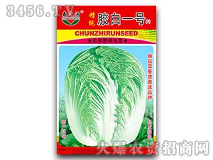 大白菜种子-胶白一号F1-春之润