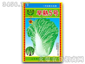 大白菜种子-早熟五号-春之润