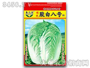 大白菜种子-胶白八号-春之润