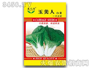 大白菜种子-玉美人-春之润