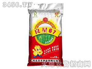 小麦种子-良星67-��丰种业