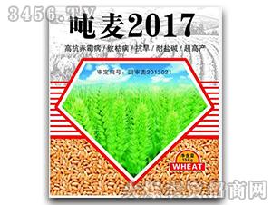 小麦种子-吨麦2017-恒创种业