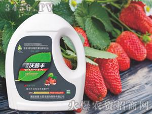 草莓专用氨基酸松脂菌露