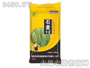 小麦种子-石麦12-地瑞种业