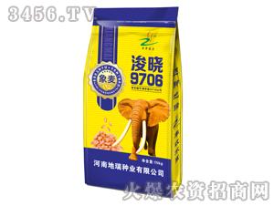 小麦种子-浚晓9706-地瑞种业