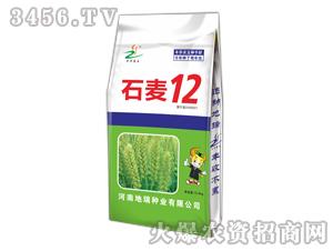 石麦12小麦种子-地瑞种业