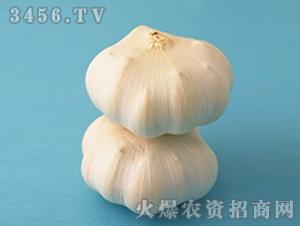 大蒜种子-华农2号-朝