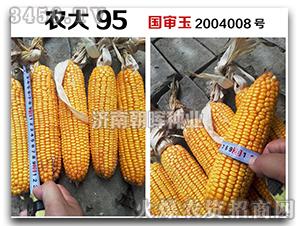 玉米种子-农大95-朝