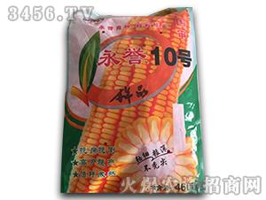 玉米种子-永誉10号-