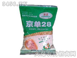玉米种子-京单28-朝