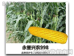 玉米种子-永誉兴农99