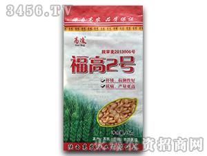 小麦种子-福高2号-鑫博农业