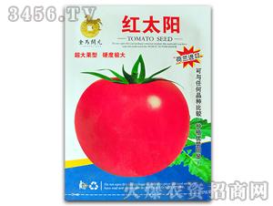 西红柿种子-红太阳-满天红日