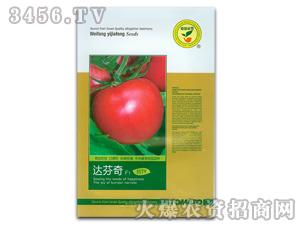 西红柿种子-达芬奇-满天红日