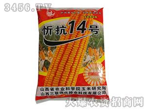 玉米杂交种-忻抗14号-杜庄主