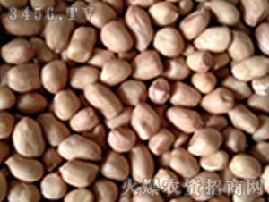 青禾杂粮-小白沙花生米