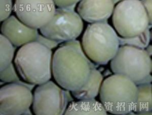 青禾杂粮-晚熟毛豆(单