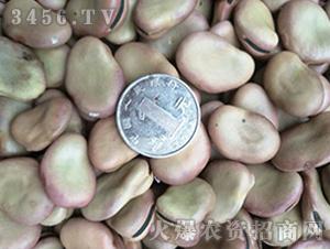 青禾杂粮-红皮香蕉蚕豆