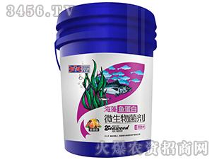 膨果型微生物菌剂-海藻鱼蛋白-英尔果
