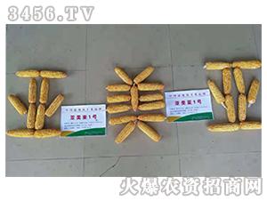 亚美亚1号-玉米种子-金麦郎