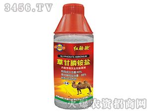 80%草甘膦铵盐可溶粒剂-红骆驼