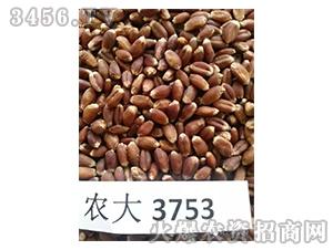 农大3753-小麦种子-农沃绿