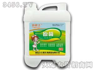 5kg原菌-田护士-久丰源