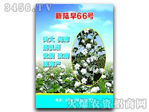 新陆早66号-棉花种子-恒创种业