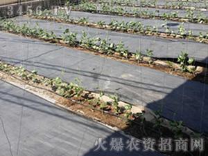 蔬菜防草布-正航塑料