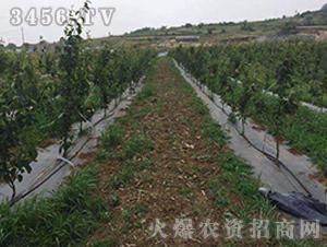 果树防草布-正航塑料