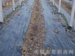防草布-正航塑料