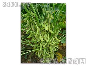 大豆种子-豫黄0311