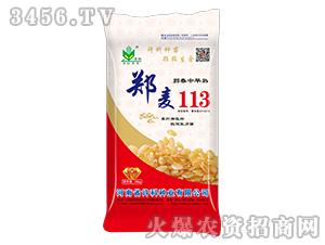 郑麦113-小麦种子-许科种业