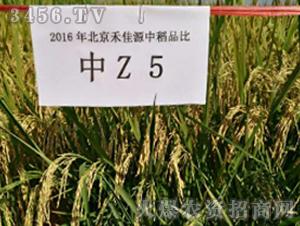 中Z5-水稻种子-禾佳源