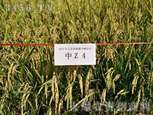 中Z4-水稻种子-禾佳源