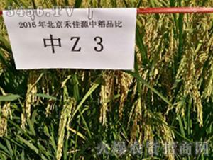中Z3-水稻种子-禾佳源