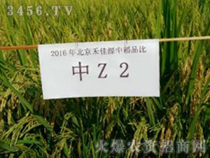 中Z2-水稻种子-禾佳源