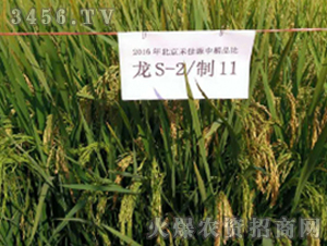 龙S-2/制11-水稻种子-禾佳源