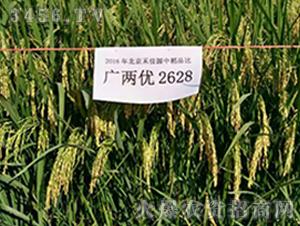 广两优2628-水稻种子-禾佳源