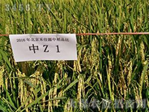 中Z1-水稻种子-禾佳源