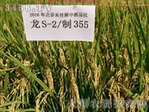 龙S-2制355-水稻种子-禾佳源