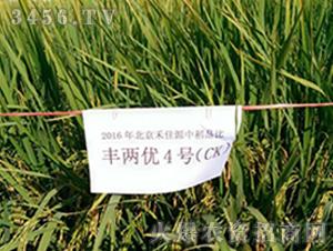 丰两优4号(CK)-水稻种子-禾佳源