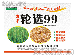 轮选99-小麦种子-农家福