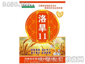 洛旱11-小麦种子-农家福