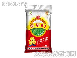 小麦新品种-良星67-��丰种业