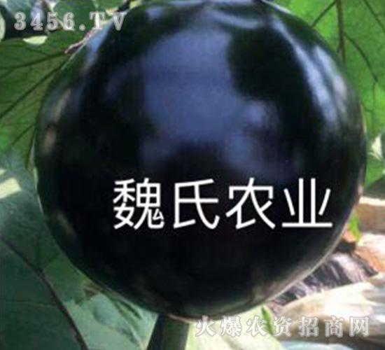 圆茄子苗-魏氏农业