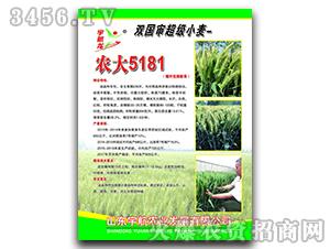 农大5181-小麦种子-宇航